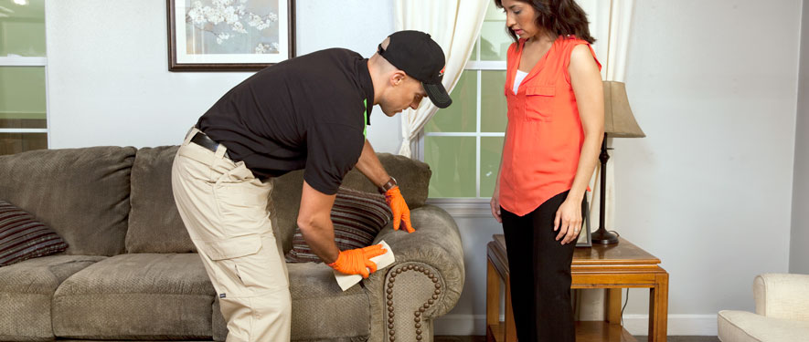 Bellevue, WA carpet upholstery cleaning